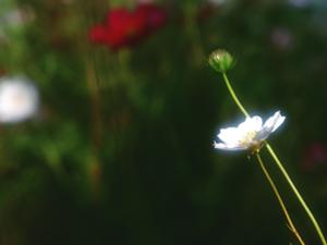 スピリチュアルイメージ【花】